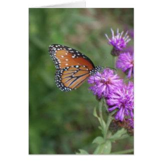 Cartão da borboleta e do Wildflower