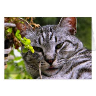 """""""Cartão da cabeça de prata do gato de gato Cartão Comemorativo"""