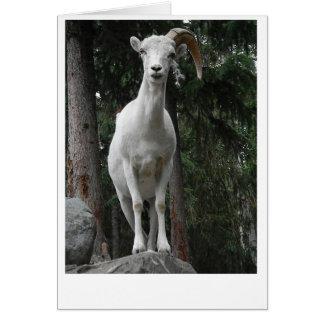 Cartão da cabra de montanha