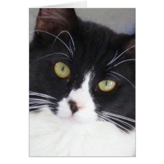 Cartão da cara do gato do smoking