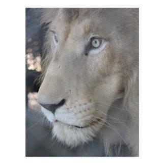 Cartão da cara do leão