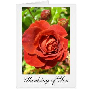 """Cartão Da """"cartão da rosa vermelha oxidação"""":  'Pensando"""