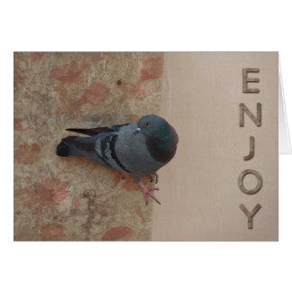 cartão da celebração do pombo