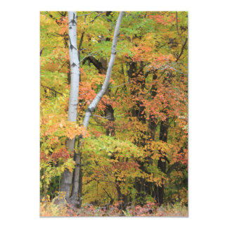 Cartão da cena do outono