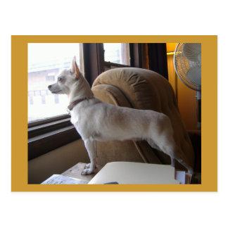 Cartão da chihuahua do escritório