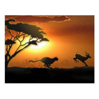 Cartão da chita e da gazela