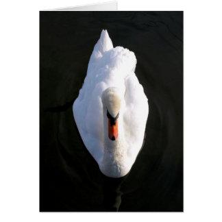 Cartão da cisne da simplicidade