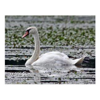 Cartão da cisne muda