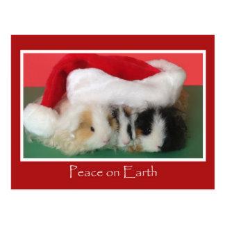 Cartão da cobaia do Natal do Cavy