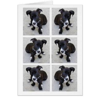 Cartão da colagem do filhote de cachorro do Loki