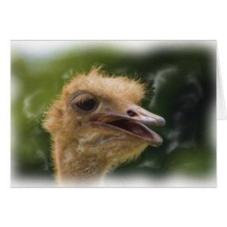 Cartão da conversa da avestruz
