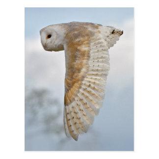 Cartão da coruja de celeiro em vôo