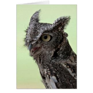 Cartão da coruja de Screech