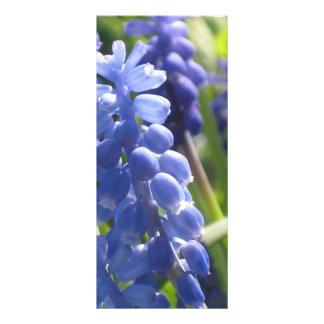 Cartão da cremalheira - jacinto de uva 10.16 x 22.86cm panfleto