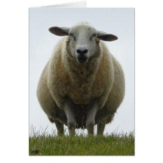Cartão da desculpa dos carneiros