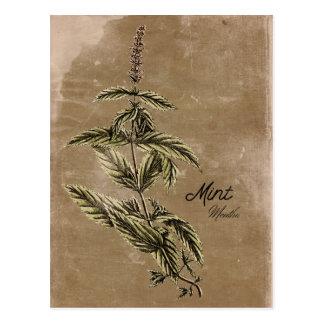 Cartão da erva da hortelã do estilo do vintage