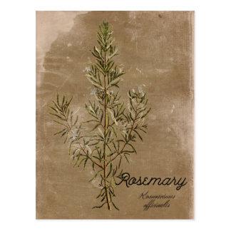 Cartão da erva de Rosemary do estilo do vintage