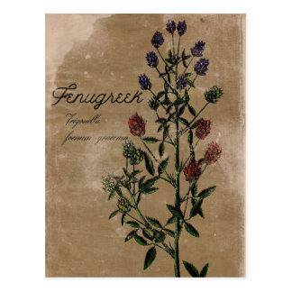Cartão da erva do feno-grego do estilo do vintage