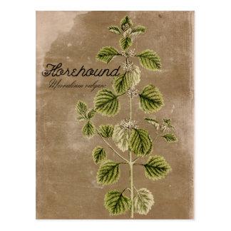 Cartão da erva do marroio do estilo do vintage