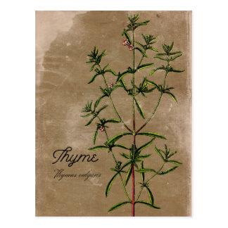 Cartão da erva do tomilho do estilo do vintage