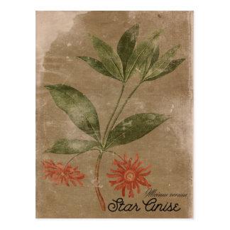 Cartão da erva dos Anis da estrela do estilo do