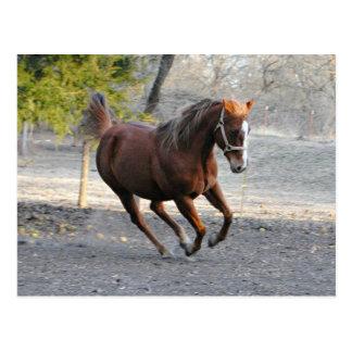 Cartão da estrela do cavalo