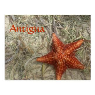 Cartão da estrela do mar de Antígua