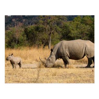 Cartão da família de rinoceronte