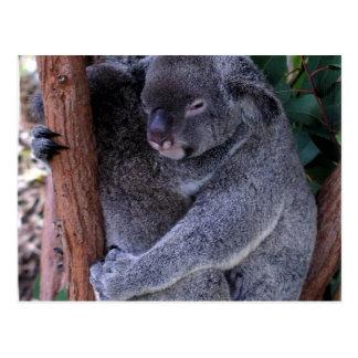 Cartão da família do Koala