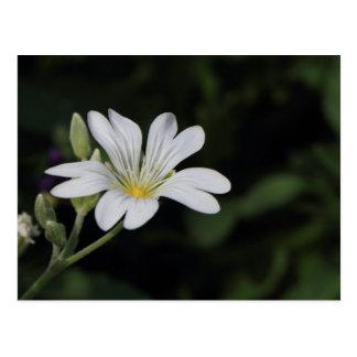 Cartão da flor branca