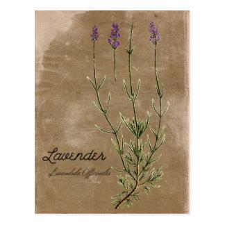 Cartão da flor da lavanda do estilo do vintage