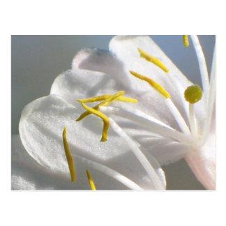 Cartão da flor da madressilva