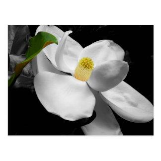 Cartão da flor da magnólia