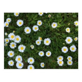 Cartão da flor da margarida
