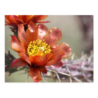 Cartão da flor de Cholla