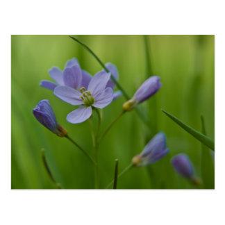 Cartão da flor de cuco