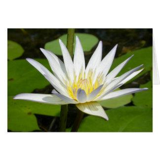Cartão da flor de Lotus branco