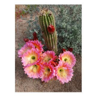 Cartão da flor do cacto