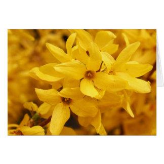 Cartão da flor do Forsythia