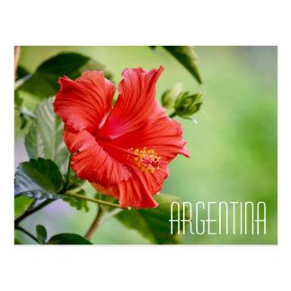 Cartão da flor do hibiscus de Argentina