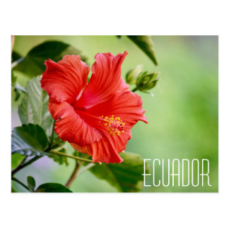 Cartão da flor do hibiscus de Equador