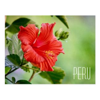 Cartão da flor do hibiscus de Peru