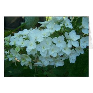 Cartão da flor do Hydrangea da folha do carvalho