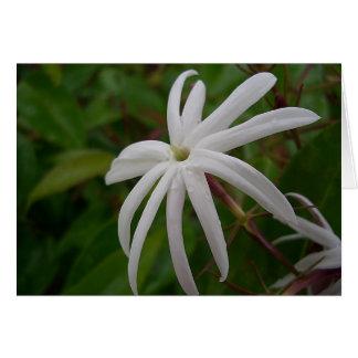 Cartão da flor do jasmim