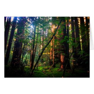 Cartão da floresta da sequóia vermelha