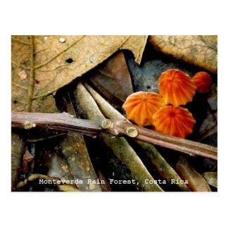 Cartão da floresta húmida de Costa Rica Monteverde Cartão Postal