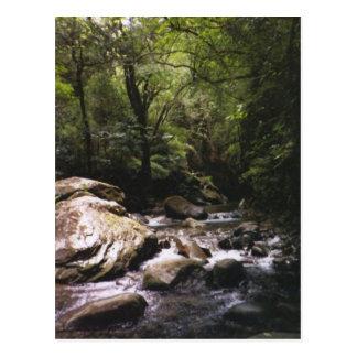 Cartão da floresta húmida de Rican da costela