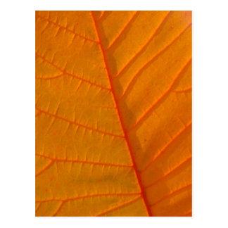 Cartão da folha da árvore de fumo