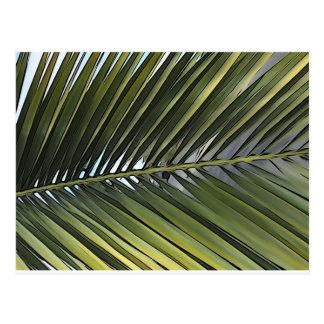Cartão da folha da palmeira
