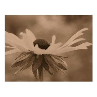 Cartão da foto da flor de Susan de olhos pretos do